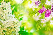 Natural floral background.