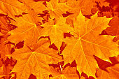 bright colorful leaves