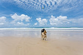 Two Happy Dogs Playing On Pet Friendly Pristine Beach