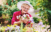 Senior woman working in her garden with a plants. Hobbies and leisure