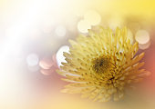 Beautiful Orange Nature Background.Colorful Artistic Wallpaper.Natural Macro Photography.Beauty in Nature.Creative Floral Art.Tranquil Nature Closeup View.Blurred space for your text.Abstract Yellow Chrysanthemum Flower.Art Work.Wedding Invitation.Golden.