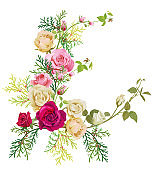 Angular frame: red, white, pink roses, thuja (arborvitae). Corner border for Christmas: flowers, buds, leaves, green twigs, cones on white background, digital draw, watercolor style, vector