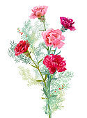 Bouquet of carnation schabaud, pink, white, red flowers, green leaves, twigs asparagus, white background, card for Mother's Day, Victory day, digital draw, illustration in watercolor style, vector