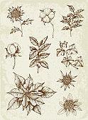 Set of winter evergreen plants