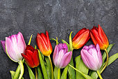 Tulip flower on dark background, copy space. A beautiful spring bouquet of flowers