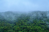 Foggy mountain in deep forest at Thailand