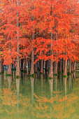 Beautiful colorful forest and water reflection in nature park