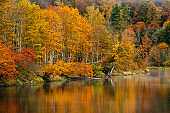 Thick colourful forest and river Gauja in autumn season in Gauja National Park, Sigulda, Latvia.