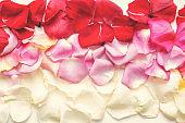 Minimal style. Minimalist Fashion photography. Pink rose petals set on white background. Flatlay. Top View