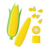 Corn ear, Ripe corn cobs, corn seeds, grains vector illustration in flat design isolated on white background. Maize collection, peeled, piece and seeds.