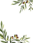 Watercolor vector card of olive branches and leaves.