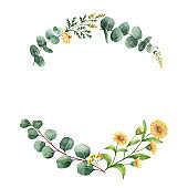 Watercolor vector wreath with green eucalyptus leaves and meadow plants.