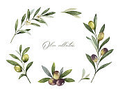 Watercolor vector frame of olive branches and leaves.