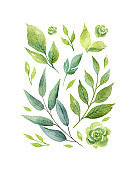 Watercolor vector card with green branches and leaves isolated on white background.