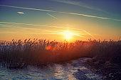Early morning sunrise over the lake. Reeds by the lake. Lake Garda (Lago di Garda), Italy, Europe