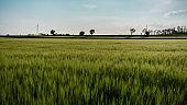 Fields of Friuli Venezia-Giulia