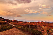 Sunset in the vineyards of Rosazzo after the storm