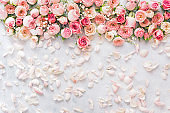 Rose background. Flat lay of rose flowers and petals over textured background