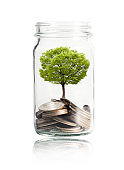 Isolated of Money coins and tree growing in jar on white background. Profit on deposit in bank and dividend for stock investment concept.