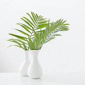 white vase with palm leaves on white background