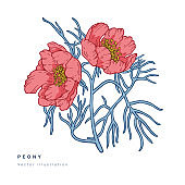 Hand draw vector narrow leaved peony flowers illustration. Floral wreath. Botanical floral card on white background.
