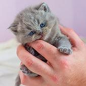 little kitten in a hand