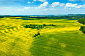 High angle view of canola fields and green fields