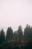 Raining morning in Finland in the silence in the forest that gives peace and quiet