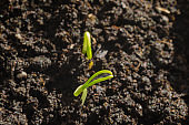 Green pepper seedlings. New concept of life.