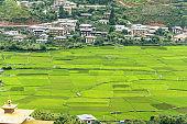 Growing crop field  Paro , Bhutan