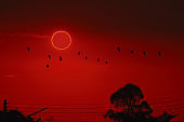 amazing phenomenon of total sun eclipse over silhouette birds flying on tree