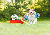 Dog chooses and fetches rope toy from hoard of pet toys in cart