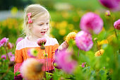 Cute little girl playing in blossoming dahlia field. Child picking fresh flowers in dahlia meadow on sunny summer day.