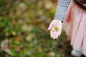 Close up of child's hand holding wood sorrel leaf