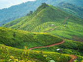 Coffee plantation landscape on top of green mountain