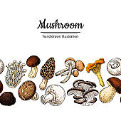 Mushroom drawing vector seamlees border. Isolated food frame sketch.