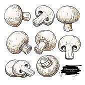 Mushroom mushroom hand drawn vector illustration set.