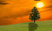 Lonely tree on the green field