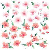 Japanese style cherry blossom illustration,
