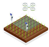 Use of a drone to control crop growth, hydration of mail and pests. Agriculture automation smart farming concept. Isometric vector illustration