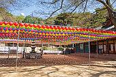 Buddha's Birthday Lotus Lanterns at the Hermitage