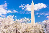 Washington DC, USA in spring season with cherry blossoms