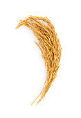 Golden rice isolated on white background,top view