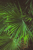 vibrant green palm leaves pattern, summer floral abstract backdrop