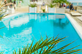 blurred summer vacation background   green palm leaf and turquoise water of the  swimming pool
