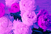 peony flowers bouquet art neon trendy toned