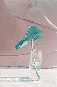 monstera leaf in glass bottle