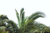palm trees summer natural background