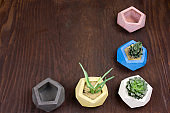 top view succulent and empty concrete pots for plants on a wooden background