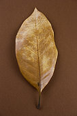 dried brown leaves on a brown background